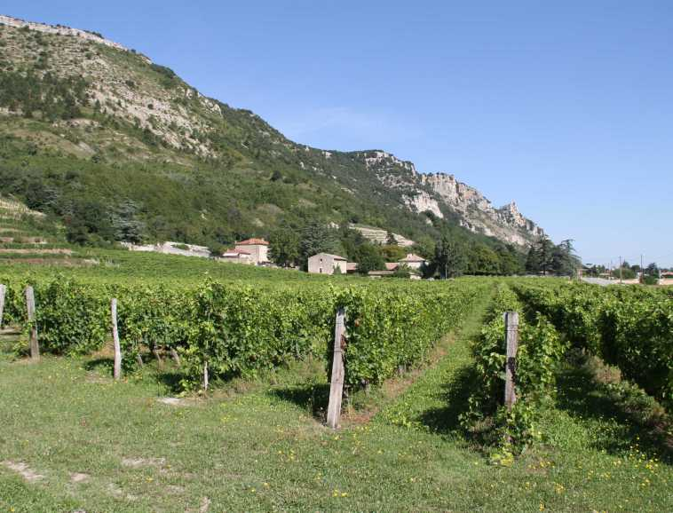 Saint-Péray vines at the foot of the 'Pic de Crussol'