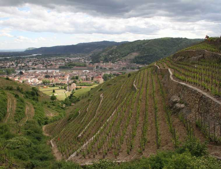 An emblematic Cave de Tain plot in Hermitage
