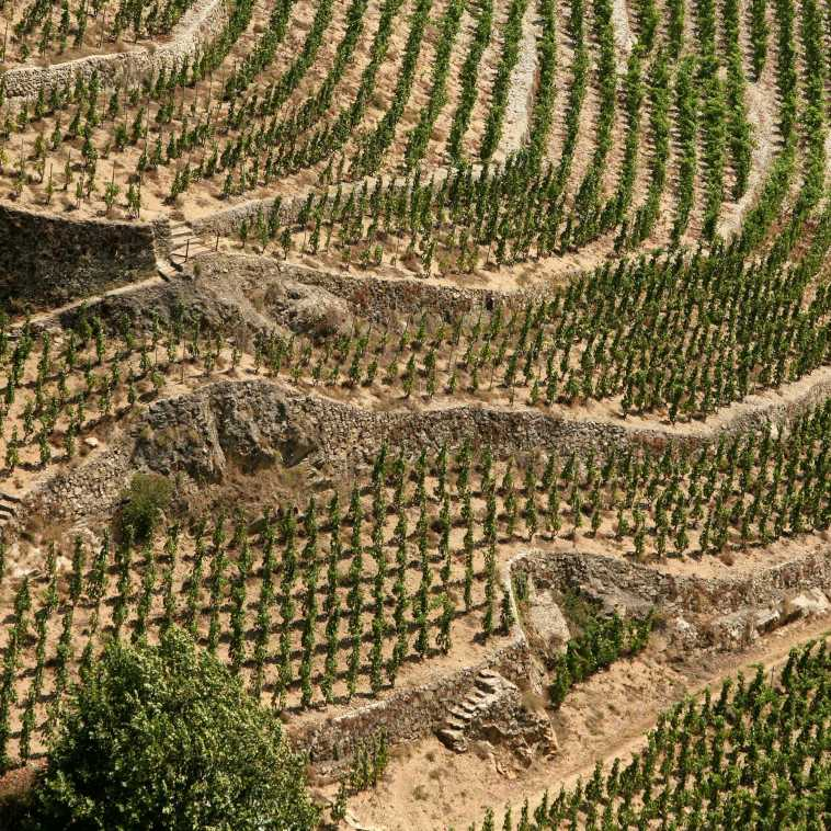 Terraces of Hermitage