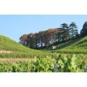 Trésors de vinothèque